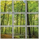 Panel LED VISION foto bosque 600x600mm con referencia 58827 de la marca VISION.
