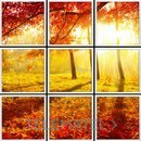 Panel LED VISION foto otoño 600x600mm con referencia 58858 de la marca VISION.